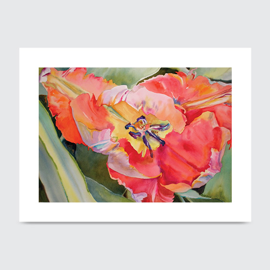 Flaming Parrot Tulip - Art Print
