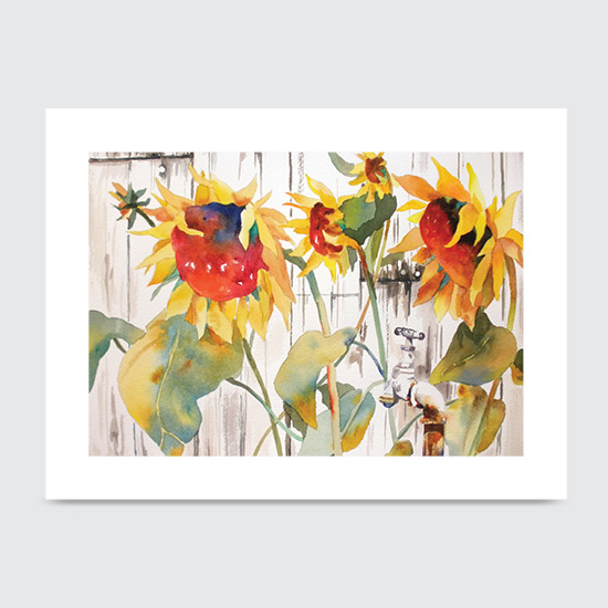 White Picket Sun Flowers - Art Print