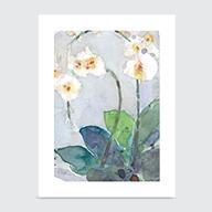 Orchids - Art Print
