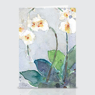 Orchids - Greeting Cards