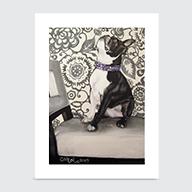 Boston Terrier - Art Print